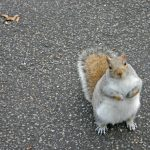 """""""Squirrel Mama"""" and """"Downtown Day"""" (Two True Stories)"""