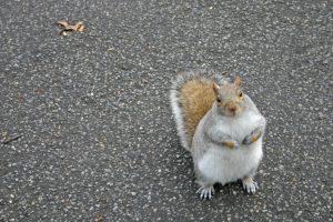 squirrel-1472656